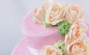 Картинка цветы, розовый, розы, лепестки, красиво, лента, шляпка