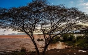 Картинка небо, горы, озеро, дерево