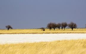 Картинка savanna, Namibia, Africa, cloudy