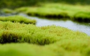 Картинка зелень, трава, вода, болото