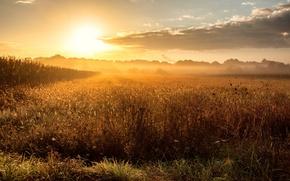 Картинка поле, туман, рассвет, утро
