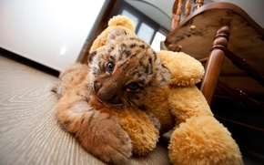 Картинка комната, игрушка, тигра