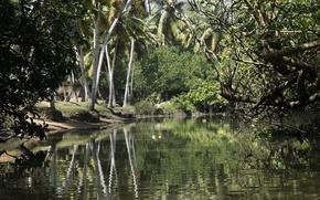 Картинка природа, река, фон, обои, Индия, прогулка, мантровые леса