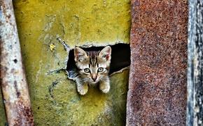 Картинка глаза, взгляд, малыш, котёнок