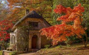 Обои England, осень, дом, Уилтшир, Stourhead Garden, Wiltshire, деревья, Англия, клён, Стурхед, парк