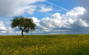 Картинка поле, небо, облака, дерево, рапс