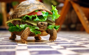 Обои юмор, животные, бутерброд, черепаха, овощи