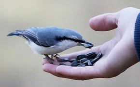 Картинка Природа, Человек, Птицы