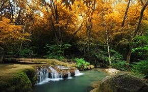 Картинка осень, лес, деревья, ручей, водопад, мох, кусты