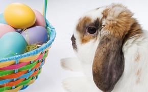 Картинка кролик, пасха, корзинка с яйцами