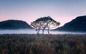 Картинка trees, mountains, lake, morning, fog, sunrise