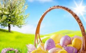 Картинка трава, цветы, ромашки, яйца, весна, пасха, grass, sunshine, flowers, spring, blue sky, eggs, easter, basket, …