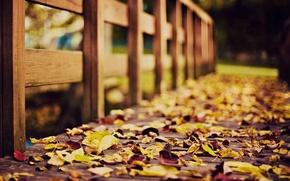 Картинка осень, фото, листва, деревянный, мостик