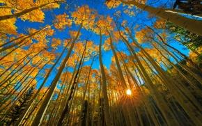 Картинка осень, лес, небо, солнце, лучи, свет, деревья, голубое, листва, день, США, курорт, штат Колорадо, Аспен