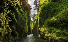 Картинка зелень, небо, лучи, свет, деревья, река, скалы, склоны, мох, Орегон, каньон, США, солнца, штат