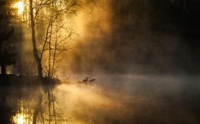 Картинка лес, деревья, птицы, туман, река, рассвет, утро