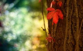 Картинка макро, красный, лист, блики, дерево, ствол, кора, боке