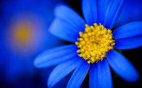 Обои краски, лепестки, цветок, природа