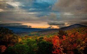 Обои лес, горы, сша, пейзаж, осень, virginia