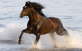 Картинка море, вода, животное, конь, бег, sea, water, animal, 1920x1080, horse, run, лошадка, gee