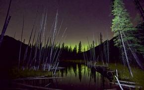 Картинка лес, небо, деревья, северное сияние, болота, ночь звезды