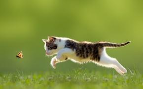 Обои прыжок, бабочка, котёнок