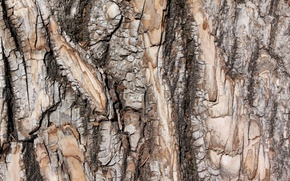 Картинка фон, дерево, кора