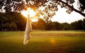 Картинка закат, дерево, платье, свадебное