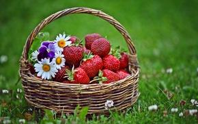 Обои трава, цветы, клубника, корзинка