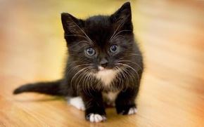 Картинка глаза, взгляд, котенок