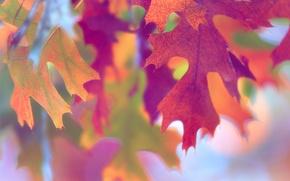Картинка макро, листва, краски, осень