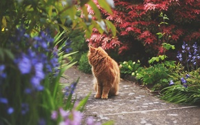Картинка кошка, кот, растения, рыжий