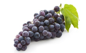 Обои fruit, leaves, bunch of grapes