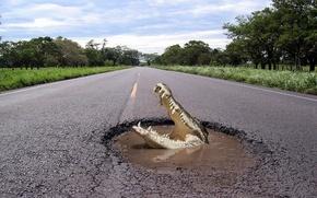 Обои Крокодил, яма, Дорога