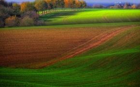 Картинка осень, деревья, поля