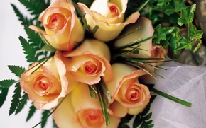 Обои Цветы, розы