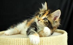 Картинка глаза, взгляд, котенок, Кошка, рыжий, cat, котэ
