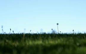 Картинка поле, небо, природа, минимализм, одуванчики