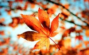 Картинка осень, макро, оранжевый, природа, лист, паутина, размытость, боке