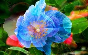 Картинка цветок, линии, абстракция, краски, мак, лепестки