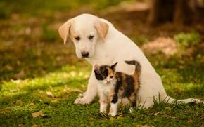Картинка собака, щенок, котёнок, друзья