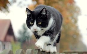 Картинка кошка, фон, забор