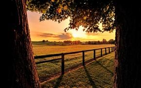 Картинка поле, листья, солнце, лучи, деревья, ветви, ограда