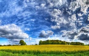 Обои небо, поле, желтый, облака