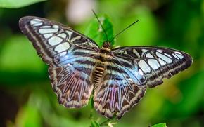 Картинка узор, бабочка, крылья