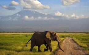 Картинка слон, гора, саванна, Африка, Килиманджаро, Амбосели, Кения