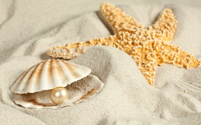 Картинка песок, ракушка, морская звезда, жемчужина