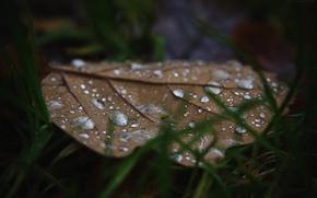 Картинка осень, трава, капли, макро, лист, Россия, macro, дуб, dobraatebe