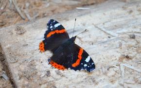 Картинка насекомые, фото, бабочка, крылья, адмирал, на земле