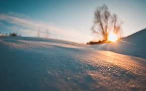 Картинка зима, снег, пейзаж, дерево, утро